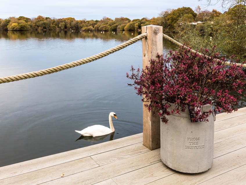 Decking with flower and swan